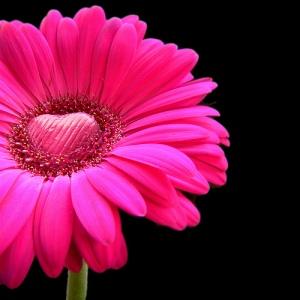 flowerheart1