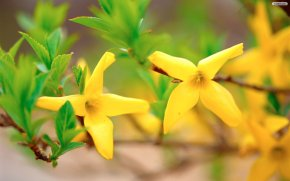yellow_flowers_wallpaper_6ce8b