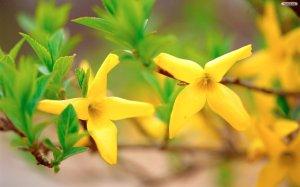 yellow_flowers_wallpaper_6ce8b