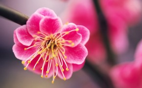 beautiful-pink-flower-hd-wallpaper